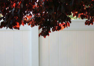flowering-plum-tree-895532_1920